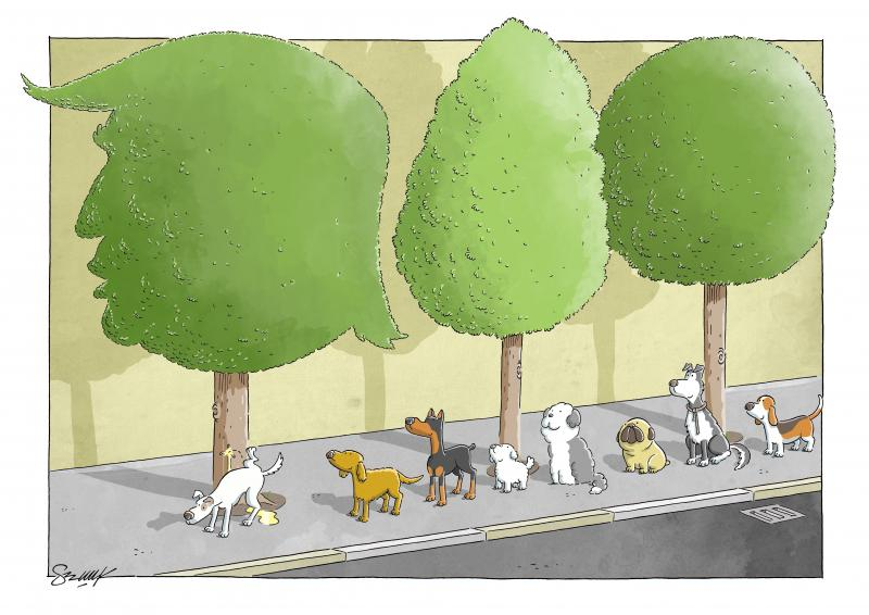 Dogs are in the queue to piss the trump shaped tree.